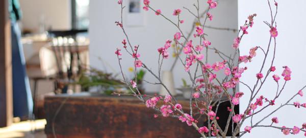 キートス1月梅の花