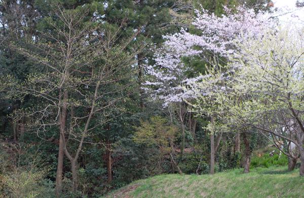 キートスの桜と桃の木