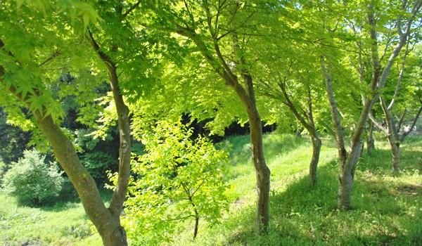 キートスの庭新緑の季節