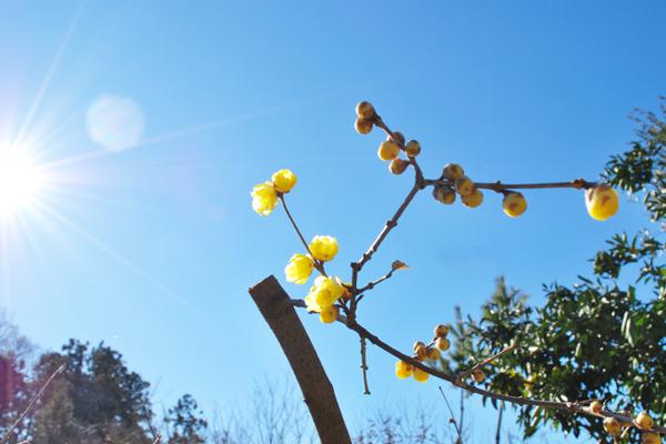 tunaguさん花の会、キートスにて