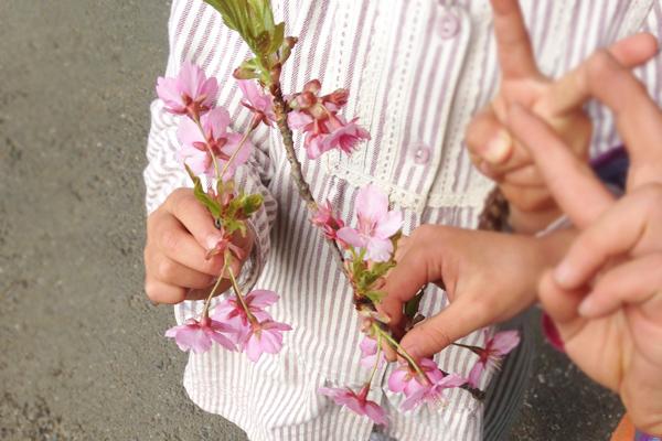 キートスの桜とこどもたち