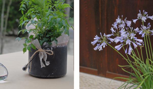 植物とお花
